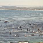 Cape to Rio boats