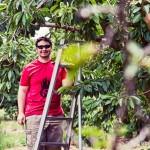 Chris picking cherries