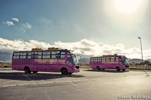 The pink busses