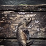 Sealy slumber