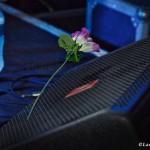 KONGOS - plastic rose