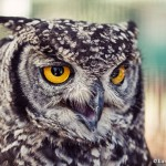 Visiting the owls and other feathered friends