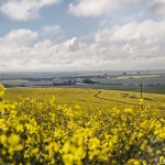 Journey to the land of Windows desktops: visiting the canola fields