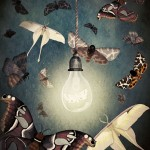 Illustration: Moths