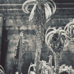 Aloes and spiderwebs