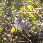 little bird in Kraalbaai